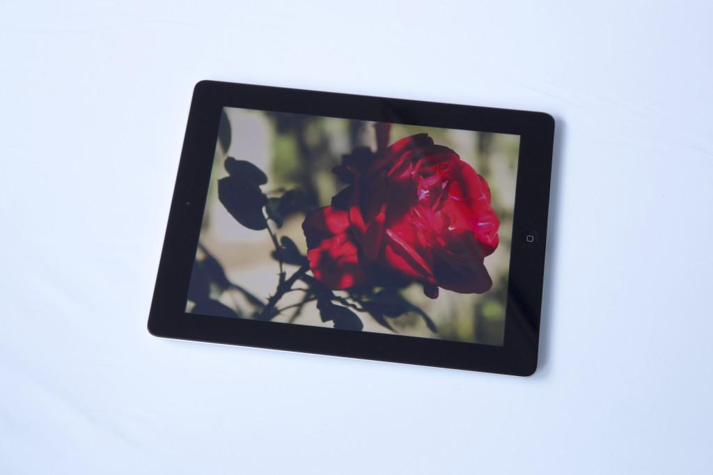 8. Roses